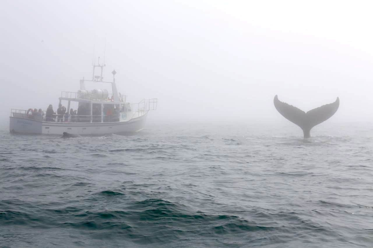 Canadian Road Trip Must-Do: Whale watching in The Bay of Fundy.