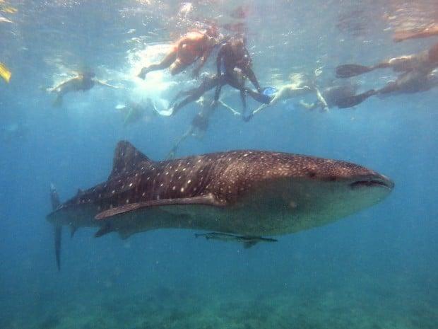 Scuba Diving The Maldives With Four Seasons Explorer