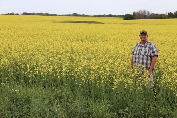 Canola Farm Saskatchewan