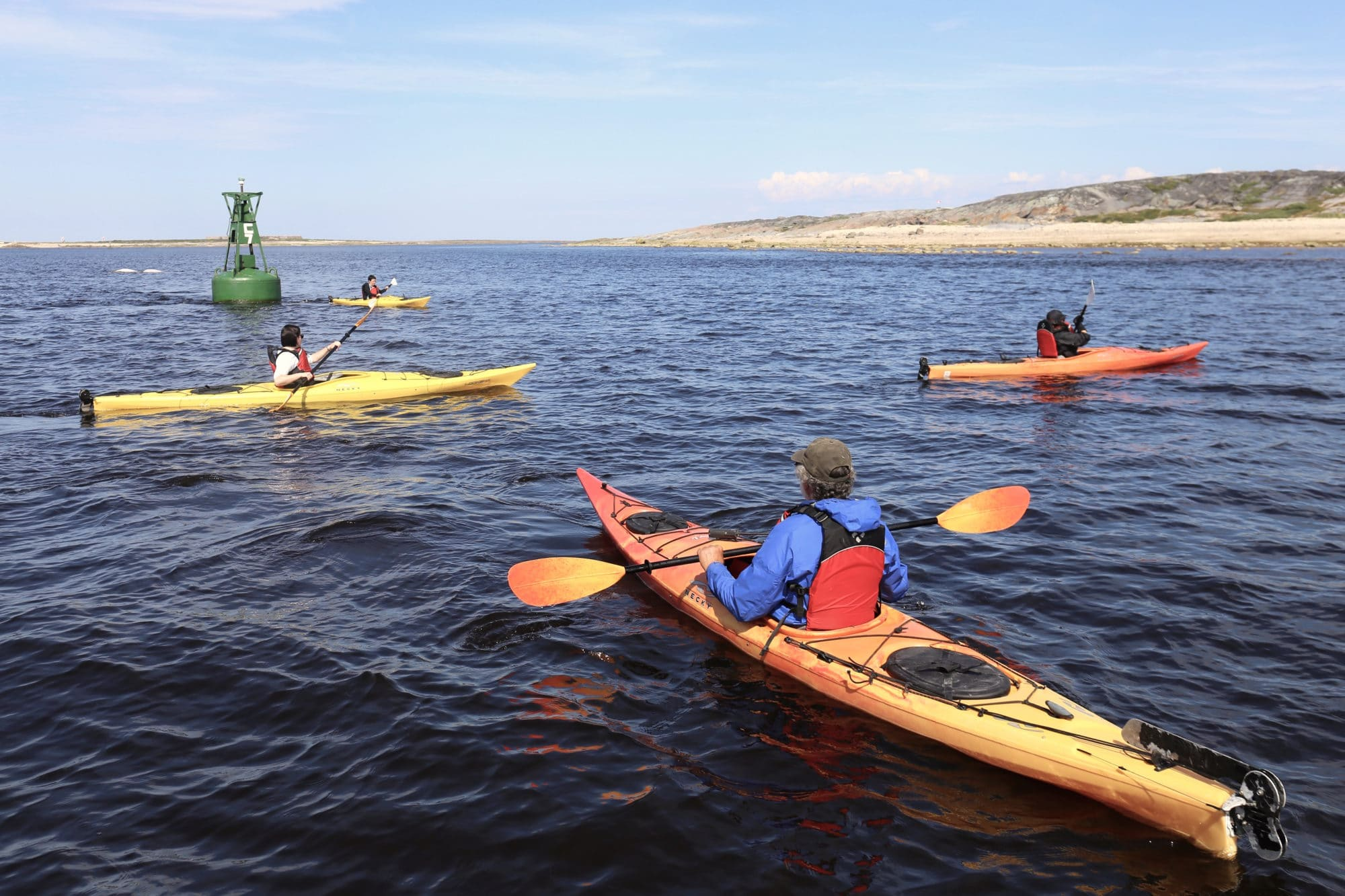 Things To Do in Manitoba: Paddle with Belugas in Churchill