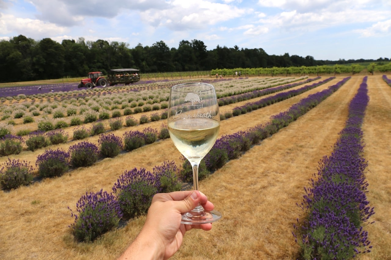 Canadian Road Trip Must-Do: Sip wine on a lavender farm in Norfolk County.