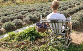 Azulée Organic Lavender Farm Charlevoix Quebec - 1