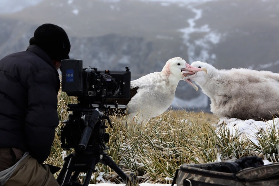 Each of the nature documentaries 8 episodes are paired with behind-the-scenes footage.
