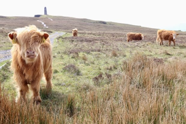 Things To Do On Islay: Best Attractions on Scotland's Whisky Island